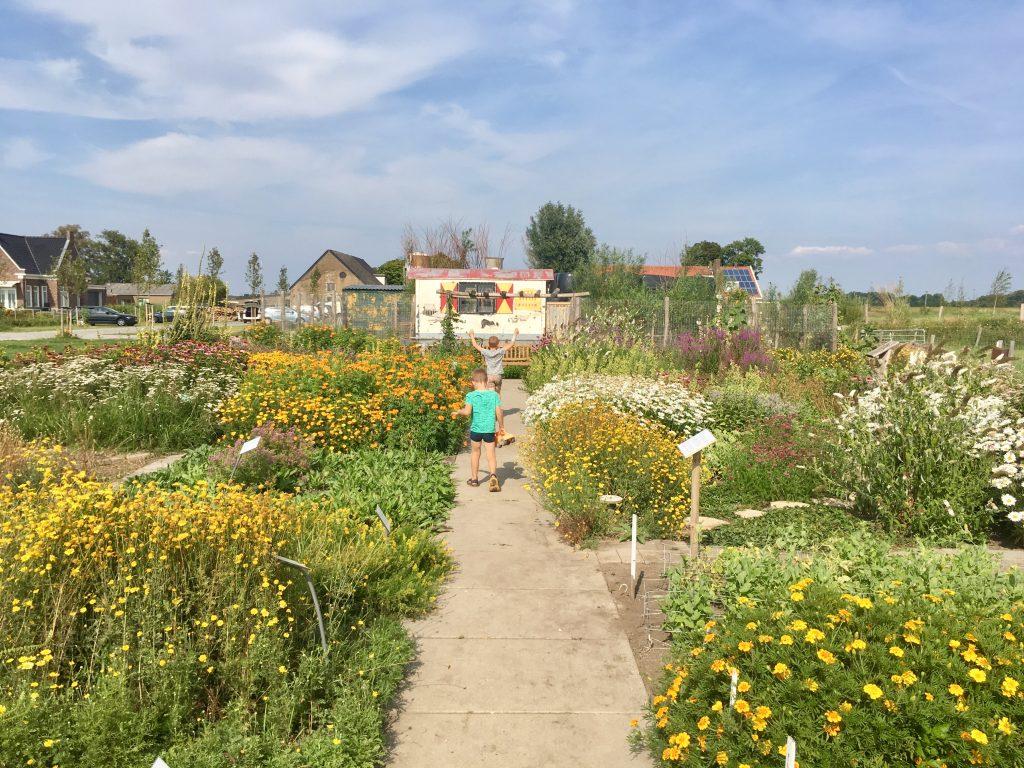 Belevenisboerderij Schieveen de moestuin