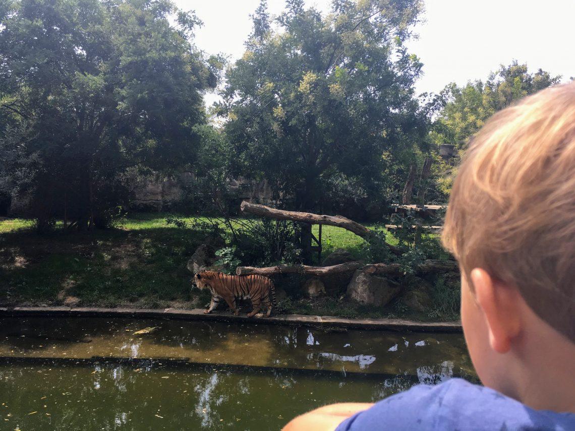 Dierentuin Praag tijgers
