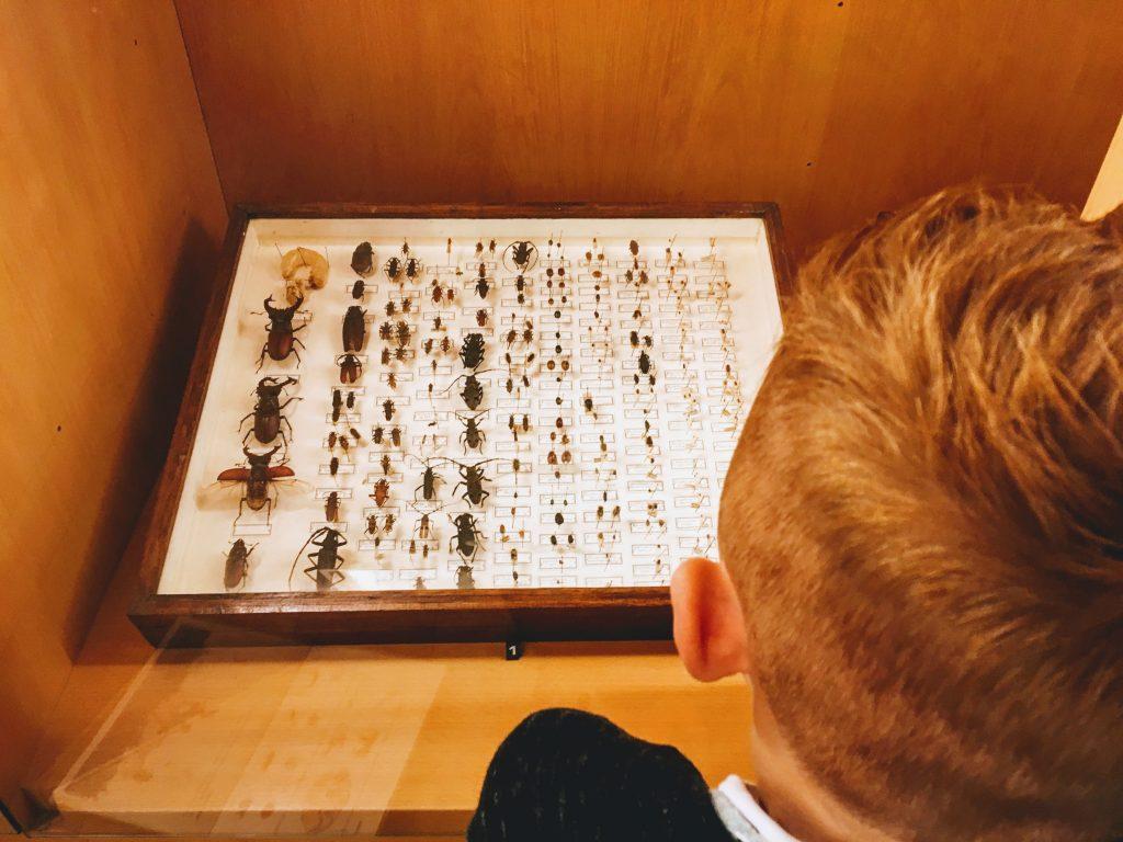 Insecten collectie van het museum