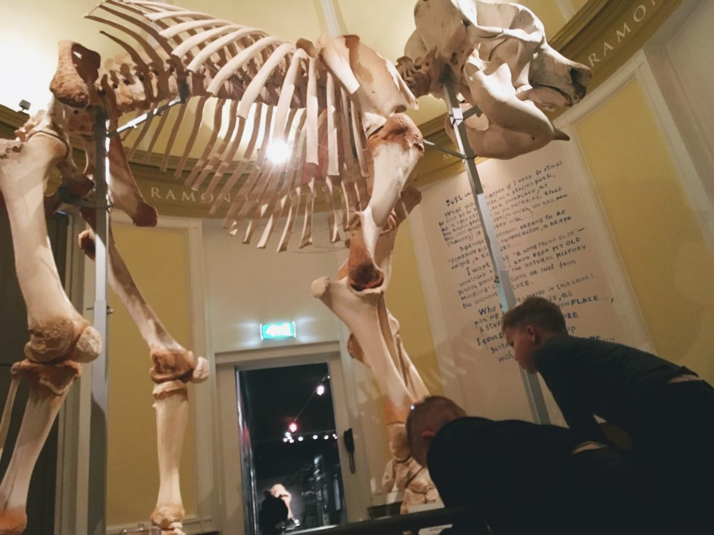 Skelet olifant ramon