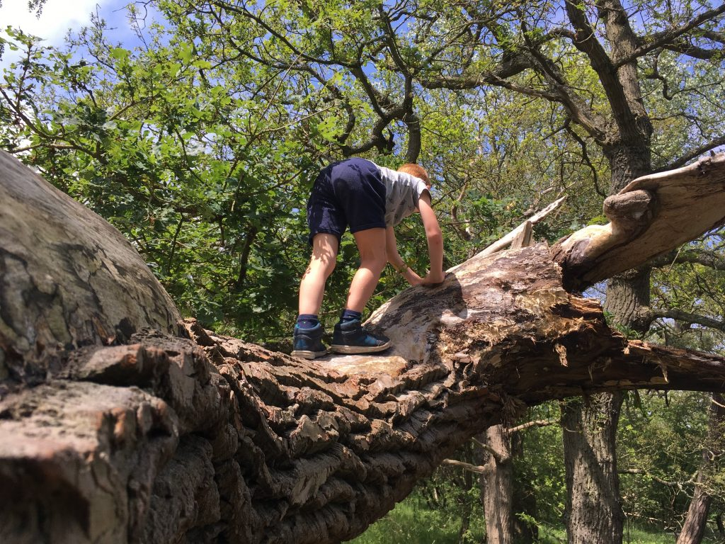 Meijendel boen klimmen